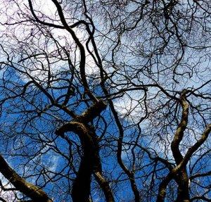 Foto: Baum gen blauer Himmel