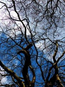 Foto ©fabrari: Bäume gen Himmel in Dublin