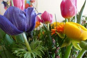 Bild eines bunten Blumenstrausses, fabrari