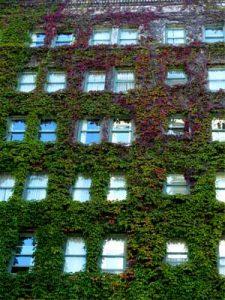 begrünte Hausfassade des Hotel Sylvia in Vancouver