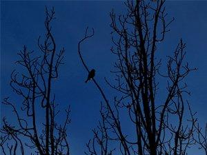 Foto mit Baumzweigen und Vogel am Abend