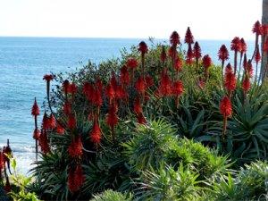 Foto: Landschaftsfoto Laguna Beach