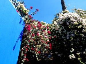 Foto: fabrari, blaue Wand im Jardin Majorelle, Marrakesch