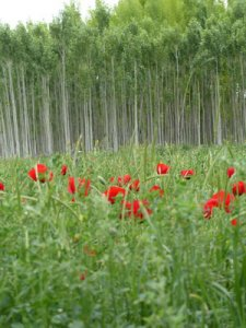 Foto: fabrari - Onkels Garten Etuikleid