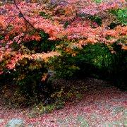 Foto Herbstlandschaft, Fabrari