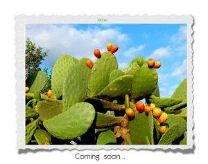 Coming Soon Vorlage
