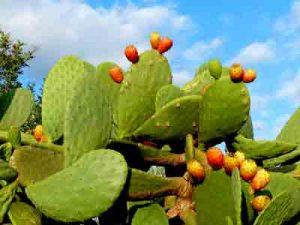 Foto von einem blühenden Kaktus ©fabrari