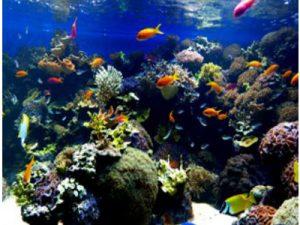 ©fabrari, Aquarium im Haus des Meeres